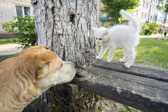 Unexpected meeting of  dog and stray kitten. Stock Photography