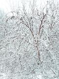Unexpected onset of winter on the first day of December. The unexpected onset of winter on the first day of December. Everything around is covered with white royalty free stock photography