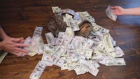 Unexpected wealth. A lot of money falls on the cat stock video