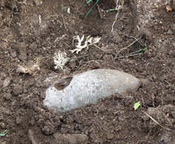 An unexploded bomb from World War II. Found in the ground Stock Image