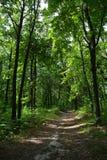 Unexplored ścieżka w bujny zieleni lesie w letnim dniu zdjęcie royalty free