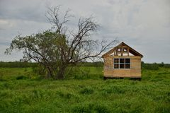 Unfertiges Holzhaus nahe dem Baum Stockbild