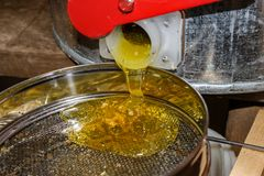 Unfiltered honey flows from the honey extractor. Honey and wax are poured onto the mesh filter. stock photo