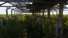 An unfinished, abandoned building overgrown with trees. conceptual background. Nature abhors a vacuum. On an old abandoned plant grow young trees stock video
