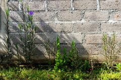 Unfinished brick walls as a background of a green garden with purple flowers royalty free stock images