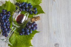 Unfinished glass of red wine and black grapes with leaves Royalty Free Stock Photo