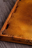 Unfinished honey making in honeycombs Royalty Free Stock Photography