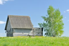 Unfinished Wooden Country House with Birch Tree Royalty Free Stock Images