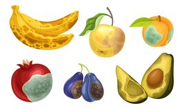 Free Unfit Fruits With Skin Covered With Stinky Rot Vector Set Stock Photo - 184327630