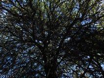 Unfocused Blätter fouces Bäume Stockbild