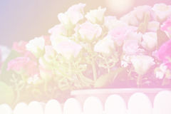 Unfocused blur rose petals, abstract romance background Royalty Free Stock Photo