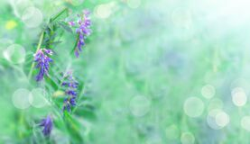 Unfocused floral background with bokeh effect and blurred sunlight. Bright floral landscape