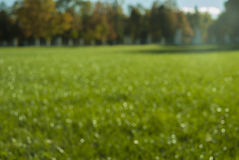Unfocused image of Grass in a Park Royalty Free Stock Photo