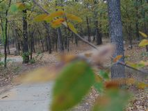 Unfocused leaves fouces trees. A lovely day with interesting views Royalty Free Stock Photo