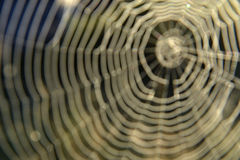 Unfocused Spiderweb Bacground. Royalty Free Stock Images