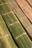 Unfold bamboo. Bamboo is spread out before it goes into a barrier wall Stock Photography