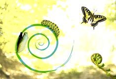 Cycle of Transformation. Unfolding Life - Cycle of Butterflies Life Royalty Free Stock Images