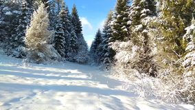 Unforgettable beauty of the winter forest stock photography