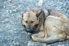 Unfortunate homeless dog Stock Images