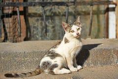 Unfortunate homeless kitten Royalty Free Stock Photo