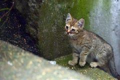 The unfortunate kitten. Unfortunate homeless and very sick kitten Stock Image