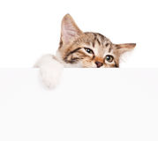 Unfortunate kitten Royalty Free Stock Images