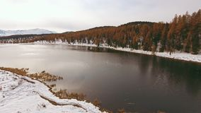 Unfrozen lake, surrounded by the first fallen snow, yellow trees. On the birch. Autumn nature, the first snow cover. Snow and a lake without ice. Beauty nature stock video footage