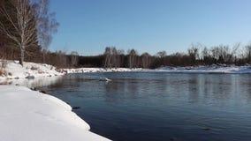 Unfrozen rzeka płynie wśród śnieżystych wybrzeży brzoza las zbiory