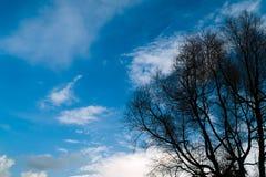 Unfruchtbare Bäume Lizenzfreie Stockfotos