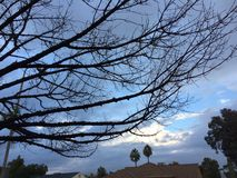 Unfruchtbare Bäume Stockfoto