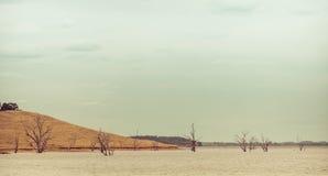 Unfruchtbare Bäume, die aus Wasser heraus wachsen Stockfotografie