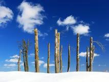 Unfruchtbare Bäume gegen Himmelhintergrund Lizenzfreies Stockfoto