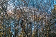 Unfruchtbare Bäume mit blauem Himmel 2 Stockfotografie