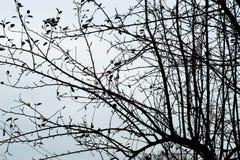 Unfruchtbare Baumaste gegen Himmel Stockfoto