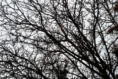 Unfruchtbare Baumaste gegen Himmel Stockfotografie