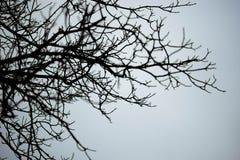 Unfruchtbare Baumaste gegen Himmel Lizenzfreie Stockfotos