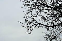 Unfruchtbare Baumaste gegen Himmel Lizenzfreie Stockbilder