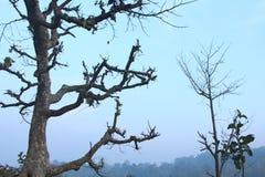 Unfruchtbare Baumaste silhouettiert Lizenzfreies Stockbild