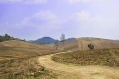 Unfruchtbare Berge des Hintergrundes, Bäume verwelkten Blätter werden gefüllt herein der Sommer Lizenzfreie Stockfotos