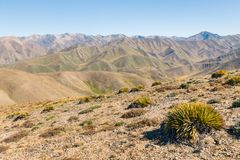 Unfruchtbare Hügel um Acheron-Tal, südliche Alpen, Neuseeland Lizenzfreie Stockbilder
