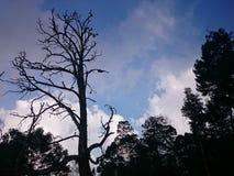 Unfruchtbarer Baum Lizenzfreies Stockfoto
