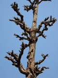 Unfruchtbarer Baum stockfotografie