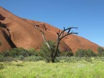 Unfruchtbarer Baum durch den Felsen, niedriger Weg Uluru lizenzfreies stockfoto