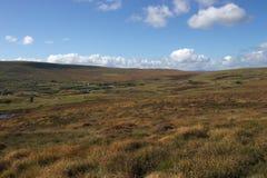 Unfruchtbares Heidemoor im guten Wetter Stockfotos