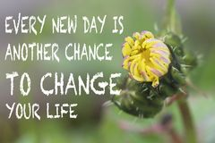 Unfurled gedeeltelijk bloemblaadjes van een paardebloemknop met positief citaat Stock Foto