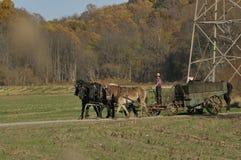 Ung Amish bonde arkivbild