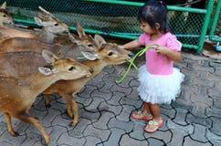 Ung asiatisk flicka som matar unga hjortar royaltyfri foto