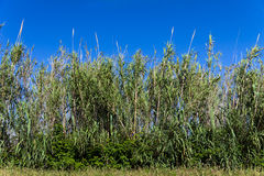Ung bambuskog på en solig dag Royaltyfri Foto