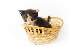 Ung bitty rolig kattunge i den vide- korgen arkivfoto