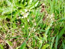 Ung blad- och gräsplannaturbakgrund för härlig liten blomma Fotografering för Bildbyråer